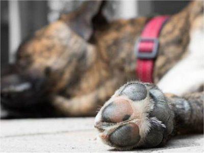 Primer condenado por matar a machetazos a un perro