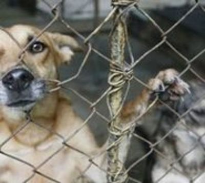Primera condena en Paraguay por maltrato y crueldad animal