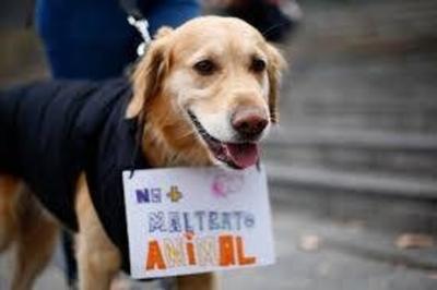 HOY / Primera condena por maltrato animal: Hombre va a dos años de cárcel por matar a un perro