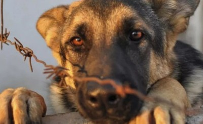 Máxima condena a un hombre por matar a un perro y agredir a otro