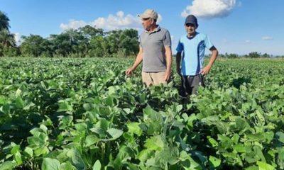 » PRODUCTORES DE CAAZAPA APLICAN AGRICULTURA SUSTENTABLE CON USO DE BIOTECNOLOGIA