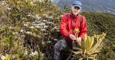 Descubren especie de frailejón en Colombia, clave en la preservación del agua