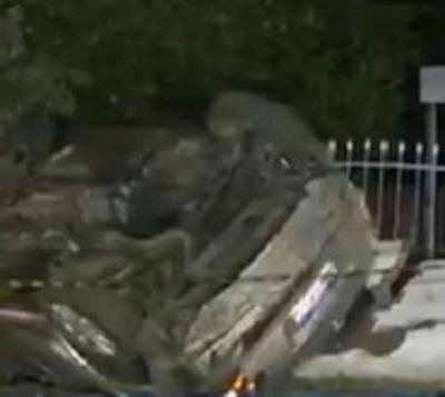 Policía derriba muralla tras chocar contra un árbol