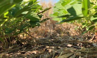 » Renuevan el compromiso de sustentabilidad en la producción agropecuaria nacional
