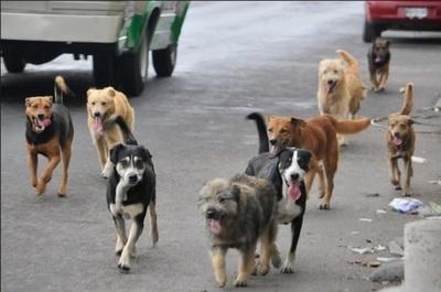 """Campaña Gabupeton"": Realizan colecta a beneficio de animales durante la pandemia"