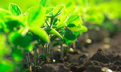 » Las bacterias dan vida al suelo y aumentan la productividad de los cultivos