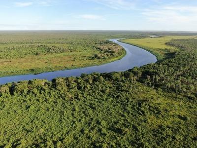 Hacé un paseo virtual dentro de la Reserva Pantanal Paraguayo