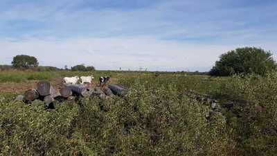 Alto Paraguay: Fiscalía Ambiental se constituyó en Comunidad Indígena para constatar presunta deforestación