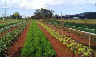 Horticultores de Mallorquín podrán producir todo el año mediante sistema de riego proveído por Itaipú