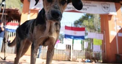 Inicia campaña de detección de leishmaniasis en perros