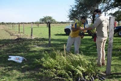 EBY entrega plantas medicinales a productores de Santiago, Misiones