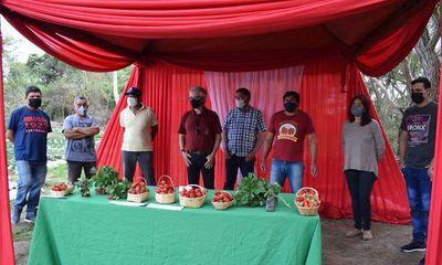 Inician cosecha de frutilla y venden a G. 30.000 el Kg