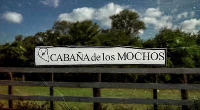 Cabaña de los Mochos: Tras 45 años de selección genética en el Chaco, preparan una Feria de Reproductores virtual