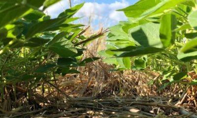 » En medio de la pandemia, la agricultura está compensando las pérdidas del 2019