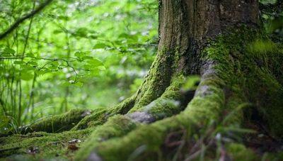 Según informe, agricultura comercial es la principal causa de la degradación de bosques