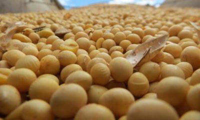 » Ingreso de divisas por envíos de soja bajó por menores precios