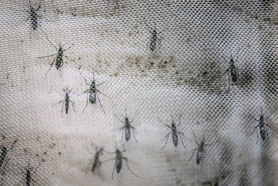 Nueva cepa de zika identificada en Brasil puede causar otra epidemia