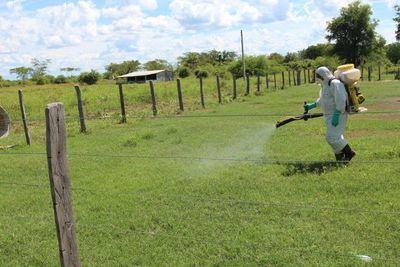 SENAVE  se mantiene alerta ante presencia de langostas en países vecinos