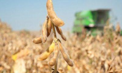 » Industrialización de la soja cayó casi 10%