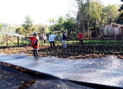 Huerta comunitaria para surtir ollas populares