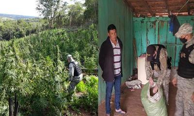Incautan 21 toneladas de marihuana en Caaguazú – Prensa 5