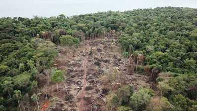 Constatan deforestación de 11 hectáreas de bosques nativos de la reserva de Itaipu