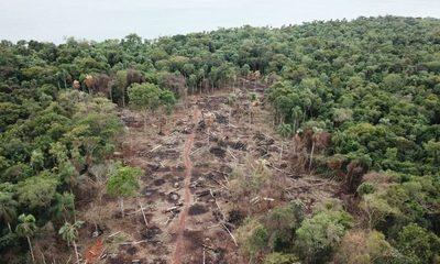 Con apoyo del gobierno central, Itaipú busca frenar deforestación de sus bosques nativos – Diario TNPRESS