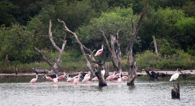 El Chaco Central busca reactivar el turismo del país