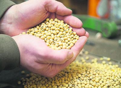 Cosecha de soja en Argentina: se produjeron 5,5 millones de toneladas menos