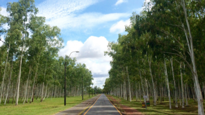 Deportistas se oponen a construcción de autocine en el Parque Ñu Guasu