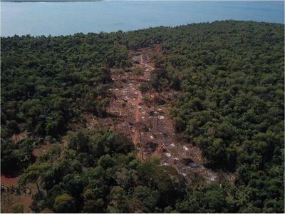 Preocupa la deforestación en las reservas de la Itaipú