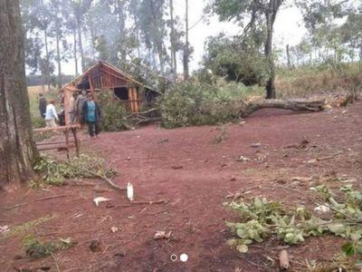 Nena de 5 años murió aplastada por un árbol