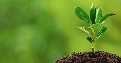 MADES: Gestiones ambientales serán completamente en línea desde este año