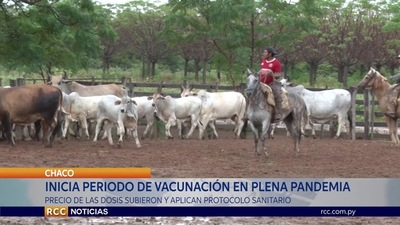 INICIA SEGUNDO PERIODO DE VACUNACIÓN CONTRA AFTOSA EN PLENA PANDEMIA