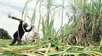 """Si contrabando de azúcar continúa, cerca de 250 mil familias podrían quedarse """"sin pan y sin trabajo"""", según cañicultor"""