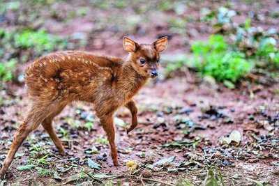 Cría de mbororo se suma a colección de especies de fauna que resguarda el Centro Ambiental