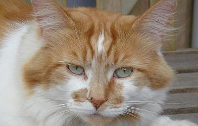 Confirman la muerte de Rubble, el gato más viejo del mundo, a los 31 años