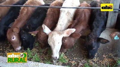 Forraje hidropónico para ganado en confinamiento