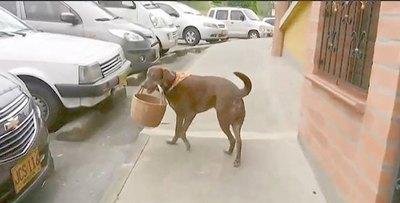 ¡Chúlina! El perrito que es un gran delivery