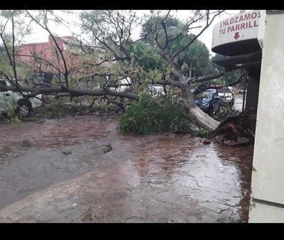 Barrio San Luis: Cayó árbol y alcanzó a dos vehículos