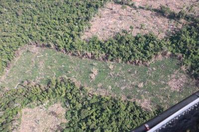 Culmina operativo en Reserva Morombí con destrucción de 476,8 toneladas de marihuana – Diario TNPRESS