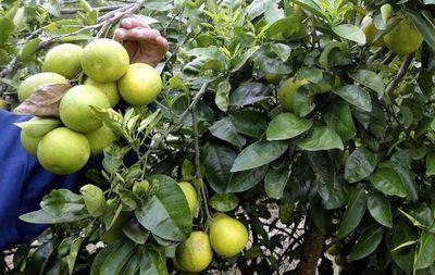 Abogado dice que no corresponde prisión preventiva por hurtar pomelos, pero fiscala se reafirma