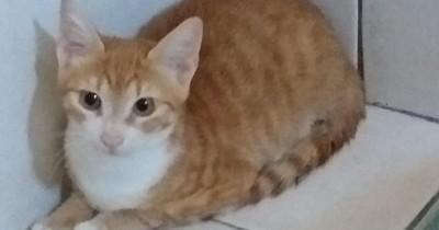 """Un """"gato migrante"""" sobrevive con su dueño a la travesía y estará en cuarentena en Italia"""