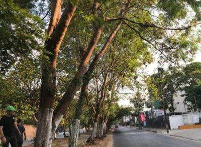 Se necesita permiso para poda de árboles