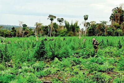 Destruyeron 155 hectáreas en la reserva Morombí para cultivar marihuana