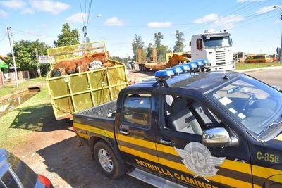 Arrean a animales sueltos en Mbocayaty del Guairá