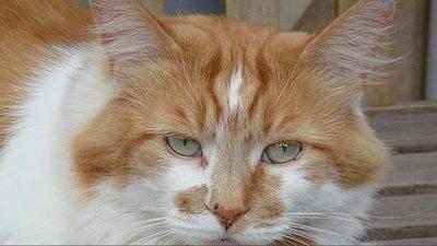 Muere a los 31 años Rubble, el gato más viejo del mundo