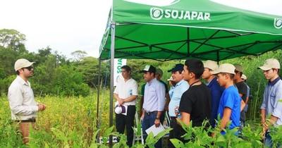 Buenas condiciones en la producción permitieron más rendimiento de variedades Sojapar