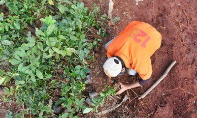 Unas 5.500 mudas ya fueron implantadas en Puerto Indio