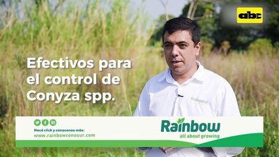 Abc Rural: Cómo controlar la maleza Conyza